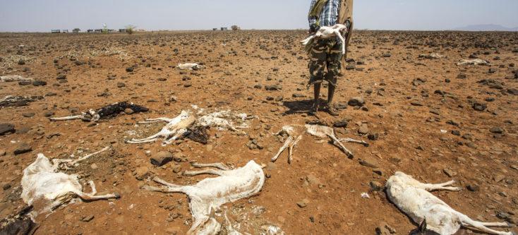 Kenia dead goat - Humanity House